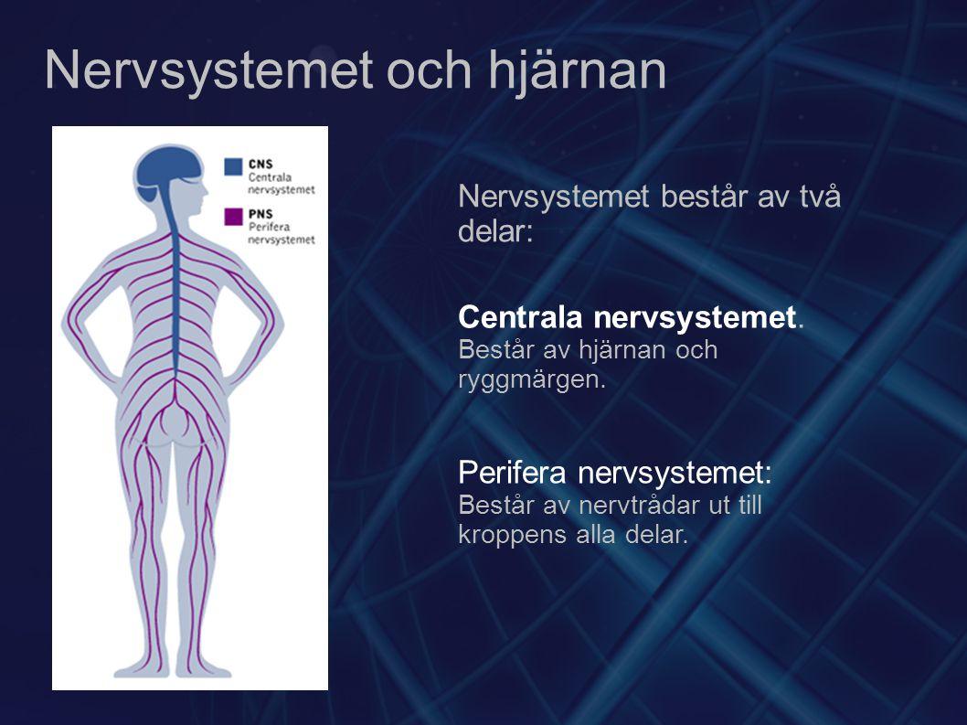 Nervsystemet och hjärnan Nervsystemet består av två delar: Centrala nervsystemet. Består av hjärnan och ryggmärgen. Perifera nervsystemet: Består av n