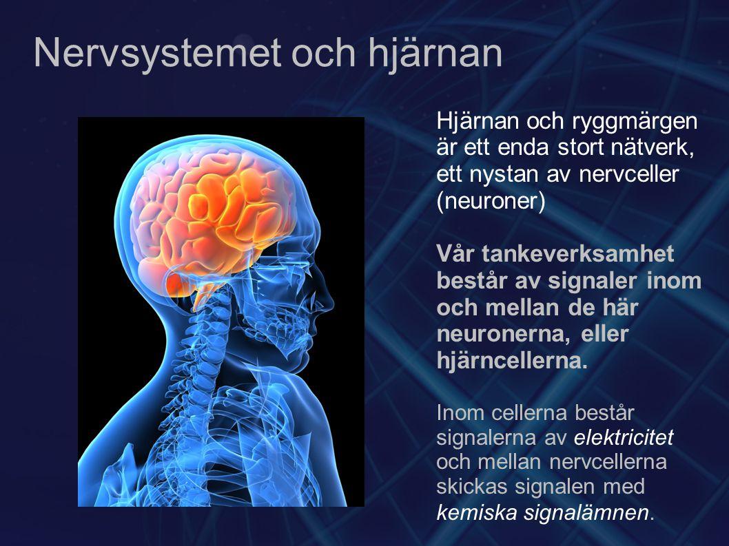 Nervsystemet och hjärnan Hjärnan och ryggmärgen är ett enda stort nätverk, ett nystan av nervceller (neuroner) Vår tankeverksamhet består av signaler inom och mellan de här neuronerna, eller hjärncellerna.