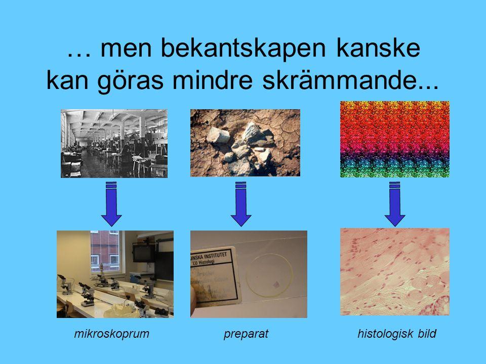 … men bekantskapen kanske kan göras mindre skrämmande... mikroskoprumpreparathistologisk bild