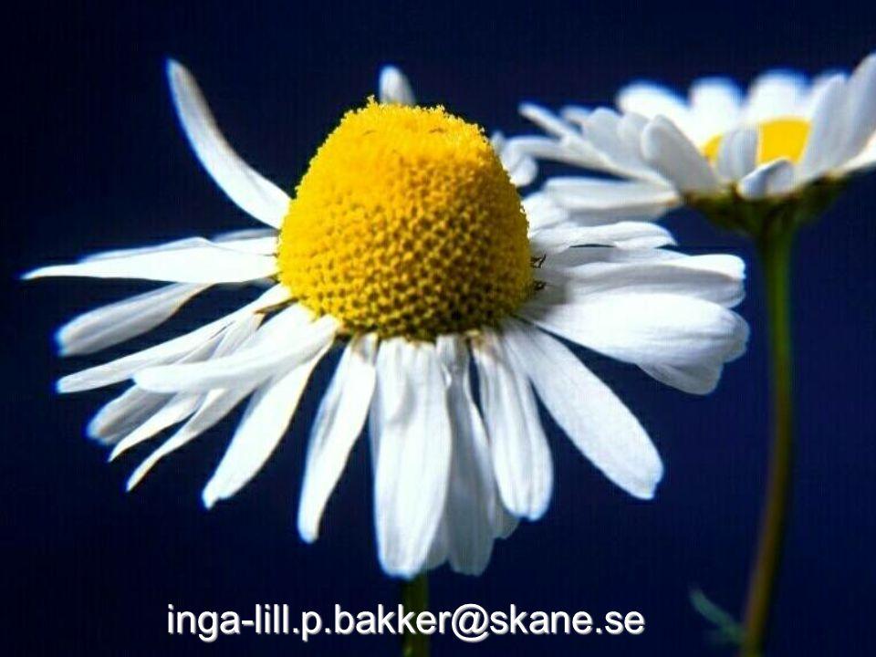 2007-04-23 © Tandvårdsnämndens kansli, Ingalill Persson Bakker inga-lill.p.bakker@skane.se
