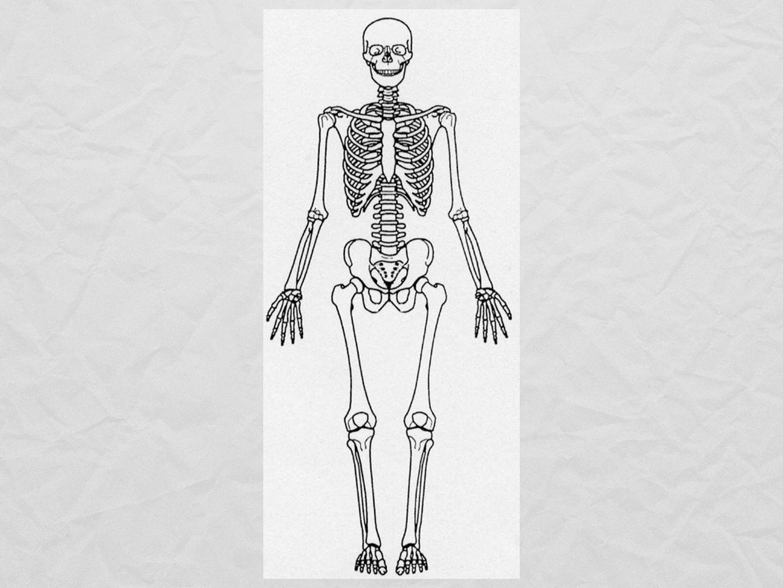 Agonister - parallella muskler, i samma led Synergister - muskler som agonisterna samarbetar med Antagonister - motverkar varandra i samma led
