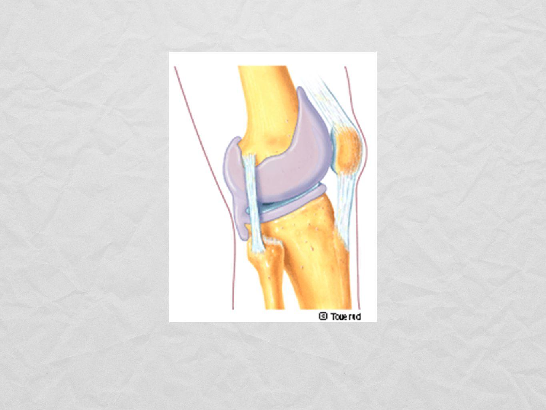 Musklernas arbete 1.Dynamiskt: Rörelse sker (koncentrisk/exentriskt).