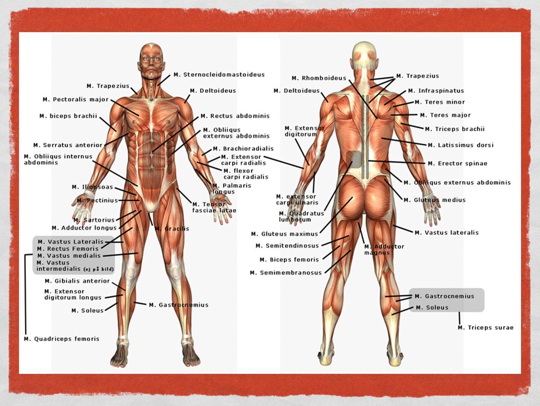 Anatomi = uppskärning