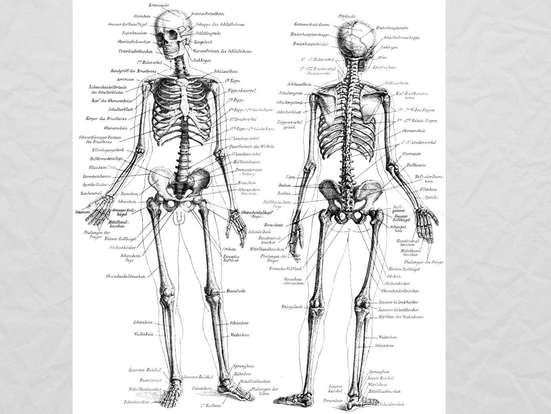 Alla ben i kroppen