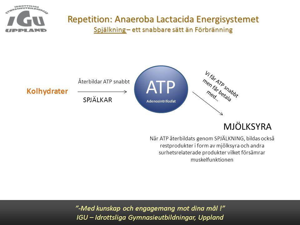 """Repetition: Anaeroba Lactacida Energisystemet Spjälkning – ett snabbare sätt än Förbränning """"-Med kunskap och engagemang mot dina mål !"""" IGU – Idrotts"""