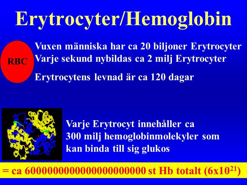 Erytrocyter/Hemoglobin Vuxen människa har ca 20 biljoner Erytrocyter Varje sekund nybildas ca 2 milj Erytrocyter Erytrocytens levnad är ca 120 dagar R