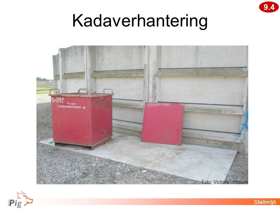 Kadaverhantering Stallmiljö 9.4 Foto: Victoria Ohlsson