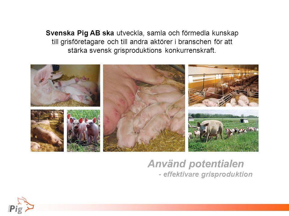 Använd potentialen - effektivare grisproduktion Svenska Pig AB ska utveckla, samla och förmedla kunskap till grisföretagare och till andra aktörer i b