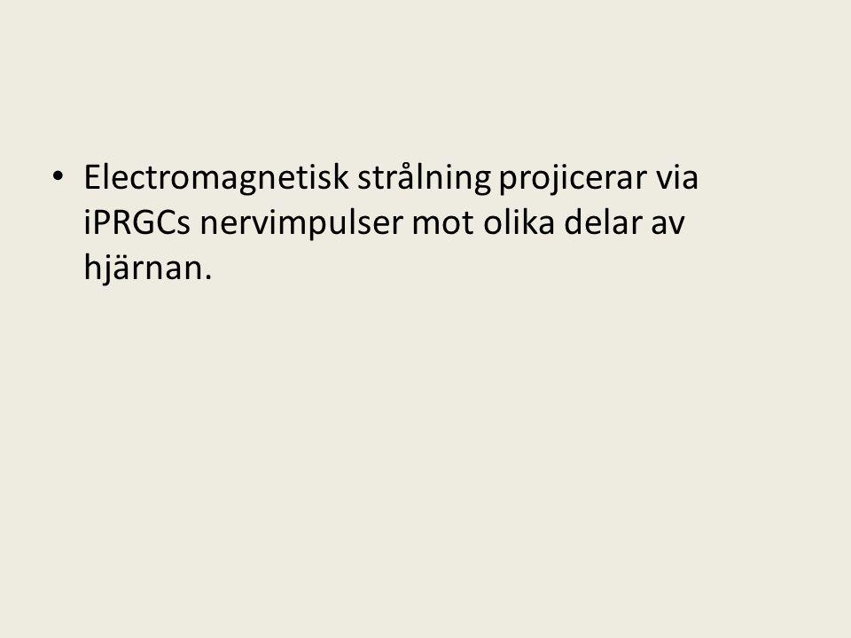 • Electromagnetisk strålning projicerar via iPRGCs nervimpulser mot olika delar av hjärnan.