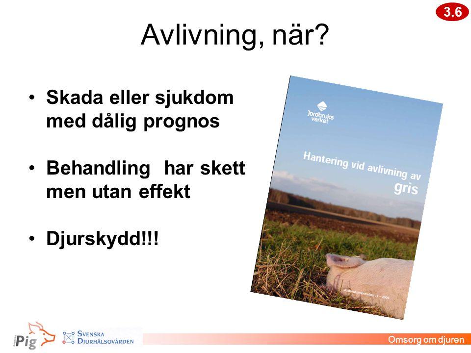 Avlivning, när? Omsorg om djuren •Skada eller sjukdom med dålig prognos •Behandling har skett men utan effekt •Djurskydd!!! 3.6
