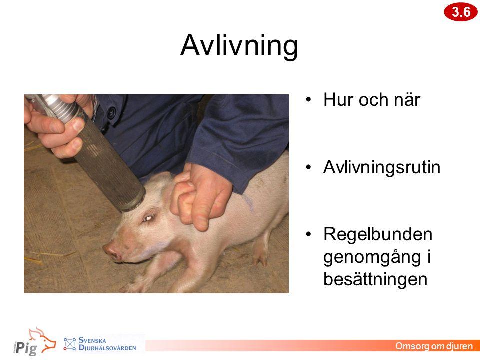 Avlivning •Hur och när •Avlivningsrutin •Regelbunden genomgång i besättningen 3.6 Omsorg om djuren