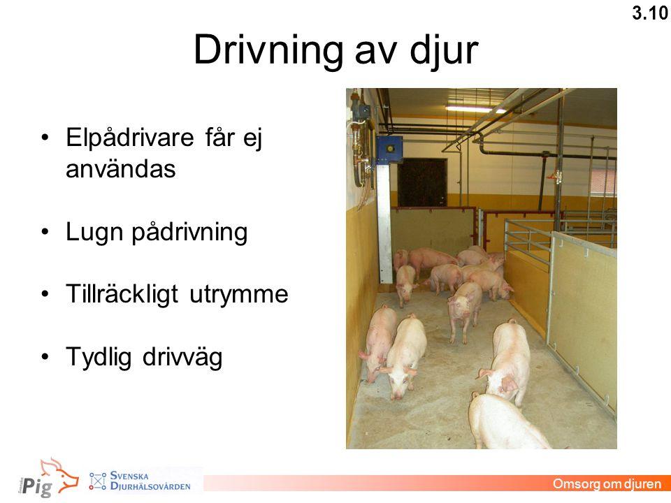 Drivning av djur •Elpådrivare får ej användas •Lugn pådrivning •Tillräckligt utrymme •Tydlig drivväg 3.10 Omsorg om djuren