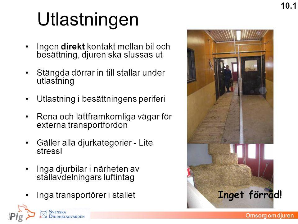 Utlastningen •Ingen direkt kontakt mellan bil och besättning, djuren ska slussas ut •Stängda dörrar in till stallar under utlastning •Utlastning i bes