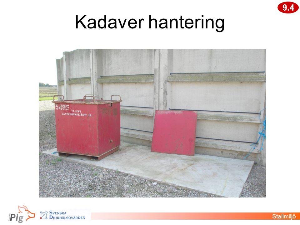 Kadaver hantering Stallmiljö 9.4