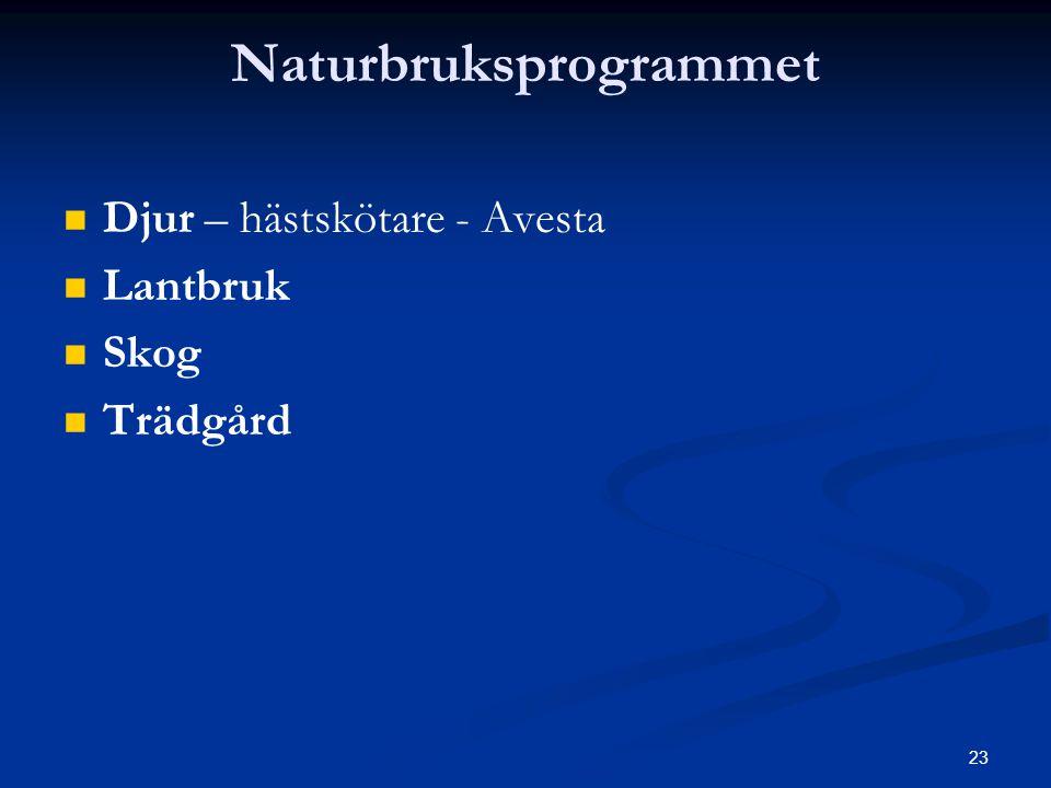 23 Naturbruksprogrammet   Djur – hästskötare - Avesta   Lantbruk   Skog   Trädgård