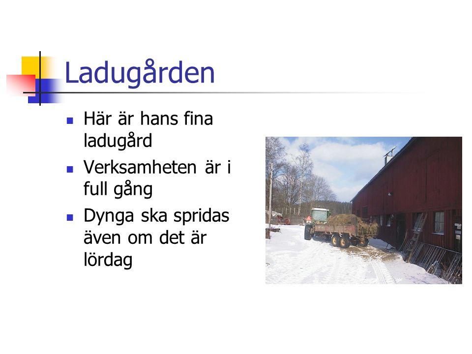 Ladugården  Här är hans fina ladugård  Verksamheten är i full gång  Dynga ska spridas även om det är lördag
