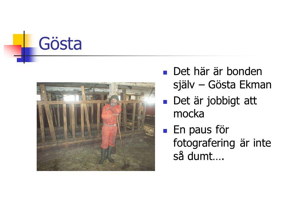 Gösta  Det här är bonden själv – Gösta Ekman  Det är jobbigt att mocka  En paus för fotografering är inte så dumt….