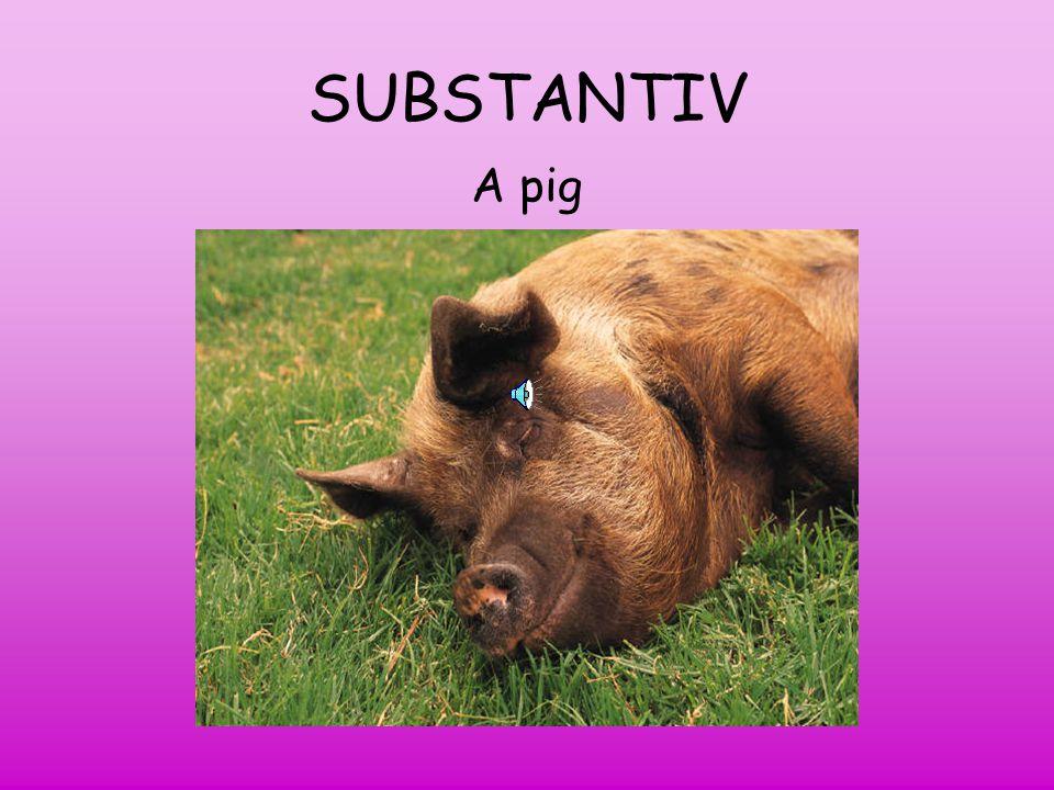 SUBSTANTIV A pig