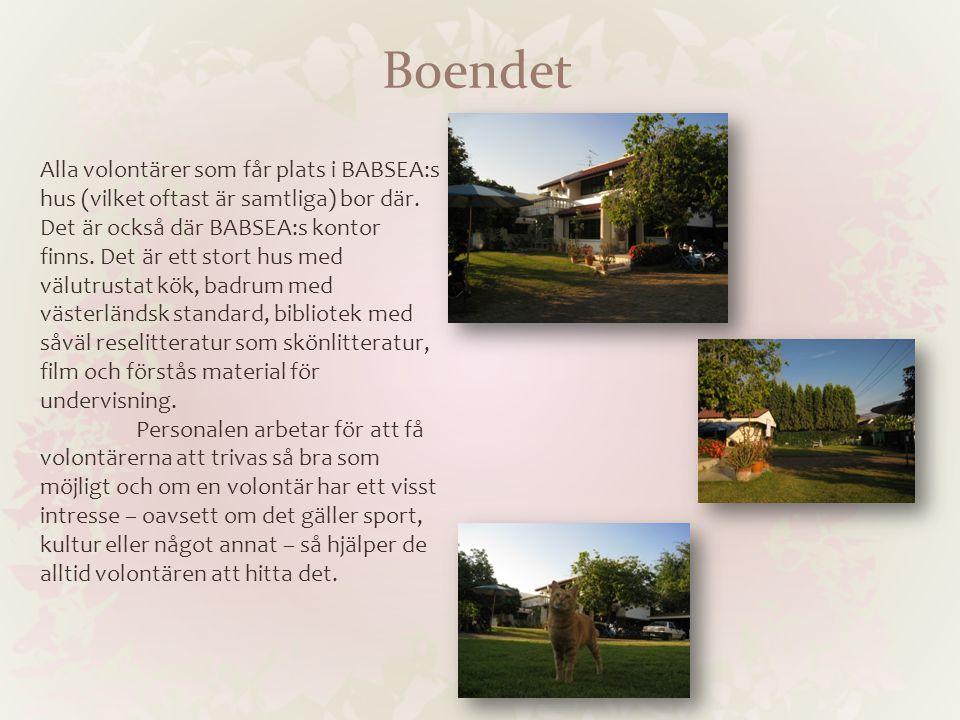 Boendet Alla volontärer som får plats i BABSEA:s hus (vilket oftast är samtliga) bor där. Det är också där BABSEA:s kontor finns. Det är ett stort hus