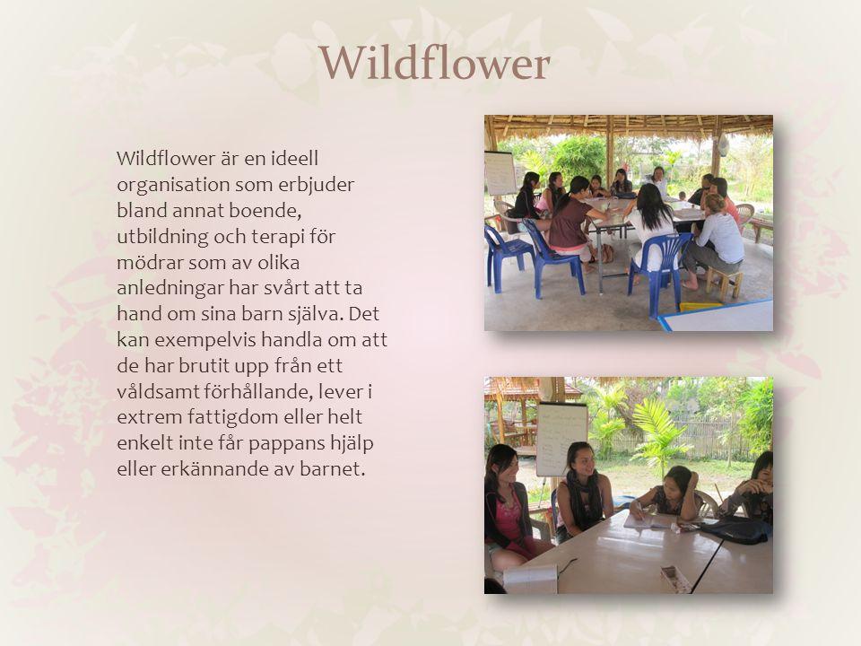 Wildflower Wildflower är en ideell organisation som erbjuder bland annat boende, utbildning och terapi för mödrar som av olika anledningar har svårt att ta hand om sina barn själva.