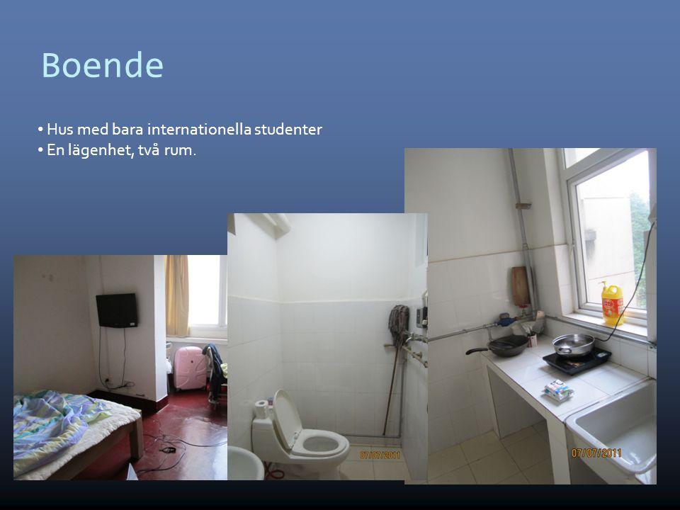 Boende • Hus med bara internationella studenter • En lägenhet, två rum.