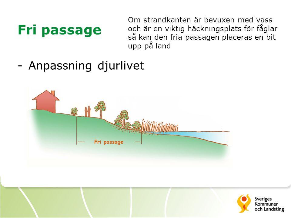 Fri passage -Anpassning djurlivet Om strandkanten är bevuxen med vass och är en viktig häckningsplats för fåglar så kan den fria passagen placeras en