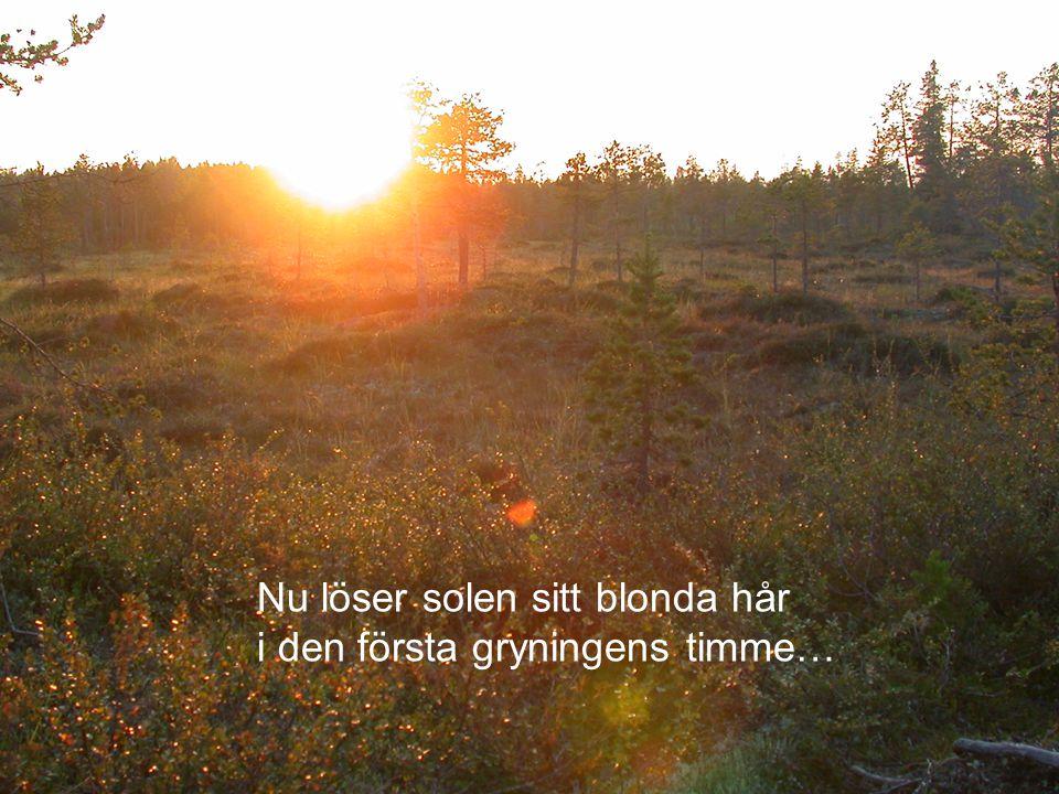 Nu löser solen sitt blonda hår i den första gryningens timme…