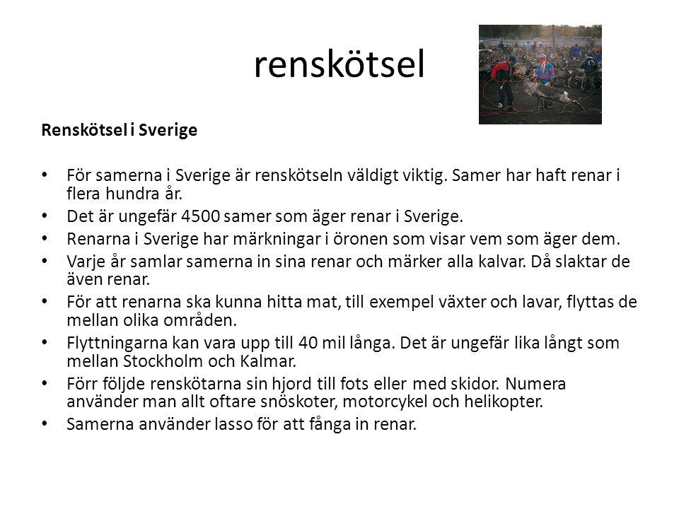renskötsel Renskötsel i Sverige • För samerna i Sverige är renskötseln väldigt viktig. Samer har haft renar i flera hundra år. • Det är ungefär 4500 s