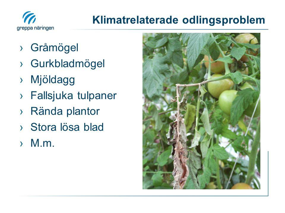 Klimatrelaterade odlingsproblem ›Gråmögel ›Gurkbladmögel ›Mjöldagg ›Fallsjuka tulpaner ›Rända plantor ›Stora lösa blad ›M.m.