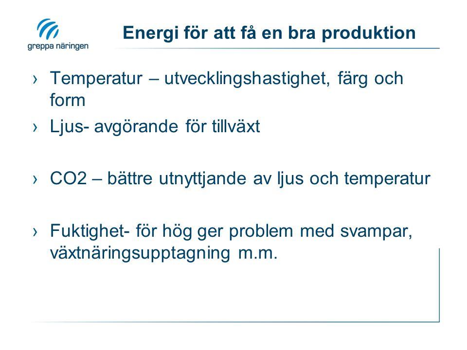 Uppskattning av fördelning Energi helår kWh/m2 Varav RF styrning Varav belysning Tomat320-45085-100 Gurka320-45050 Kryddor650300-400 Krukväxter250-450varierande