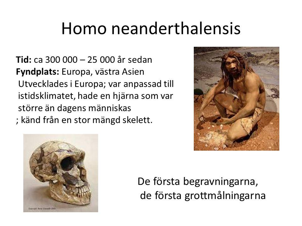Homo neanderthalensis Tid: ca 300 000 – 25 000 år sedan Fyndplats: Europa, västra Asien Utvecklades i Europa; var anpassad till istidsklimatet, hade e