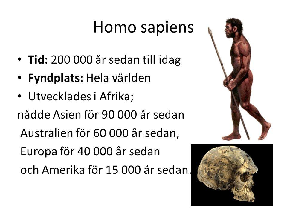 Homo sapiens • Tid: 200 000 år sedan till idag • Fyndplats: Hela världen • Utvecklades i Afrika; nådde Asien för 90 000 år sedan Australien för 60 000
