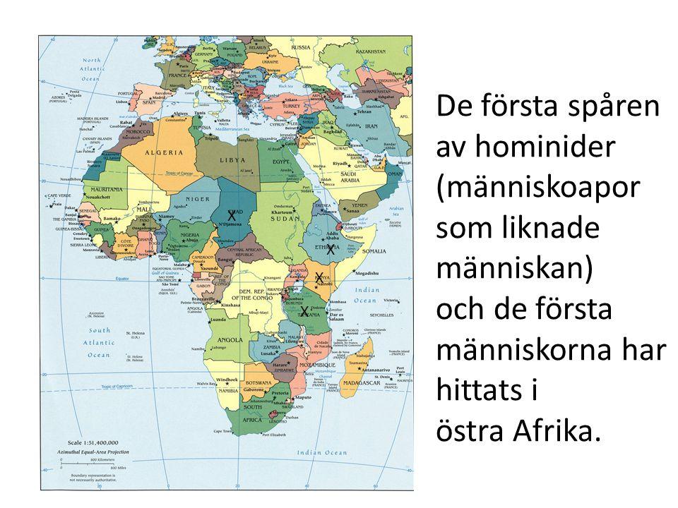 De första spåren av hominider (människoapor som liknade människan) och de första människorna har hittats i östra Afrika. X X X X