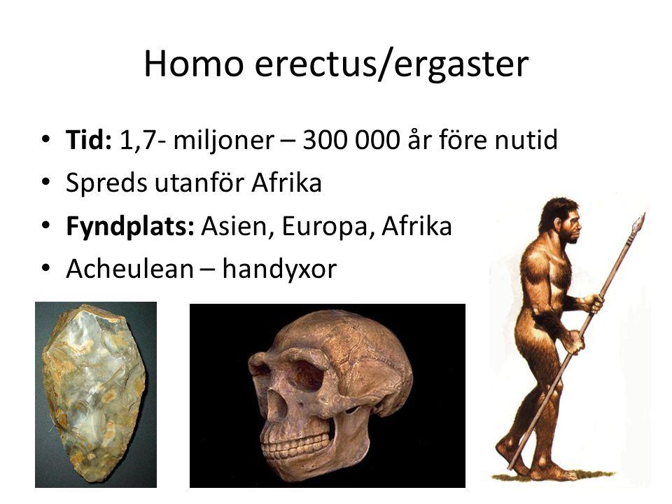 Homo erectus/ergaster • Tid: 1,7- miljoner – 300 000 år före nutid • Spreds utanför Afrika • Fyndplats: Asien, Europa, Afrika • Acheulean – handyxor