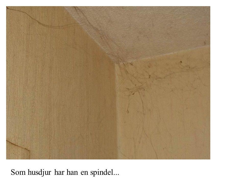 Som husdjur har han en spindel...