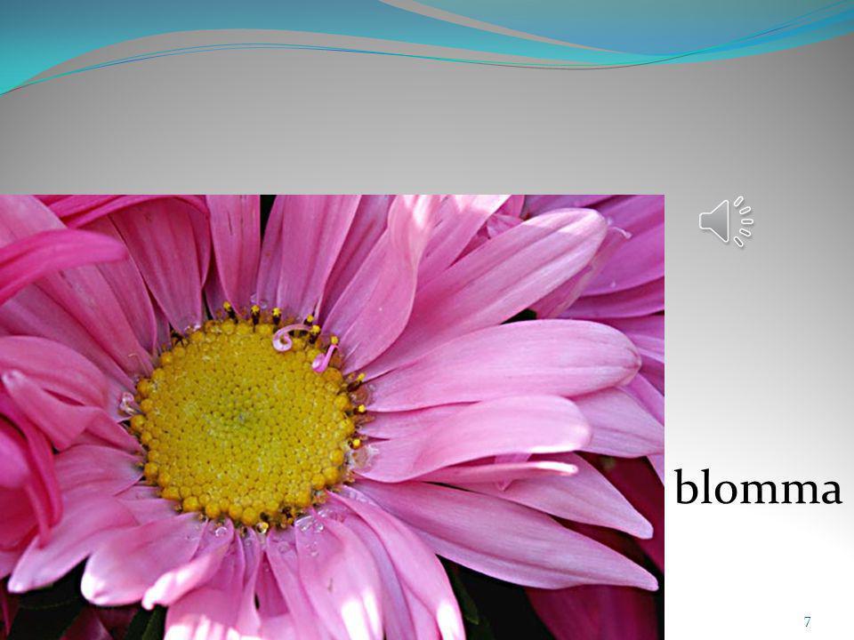 7 blomma
