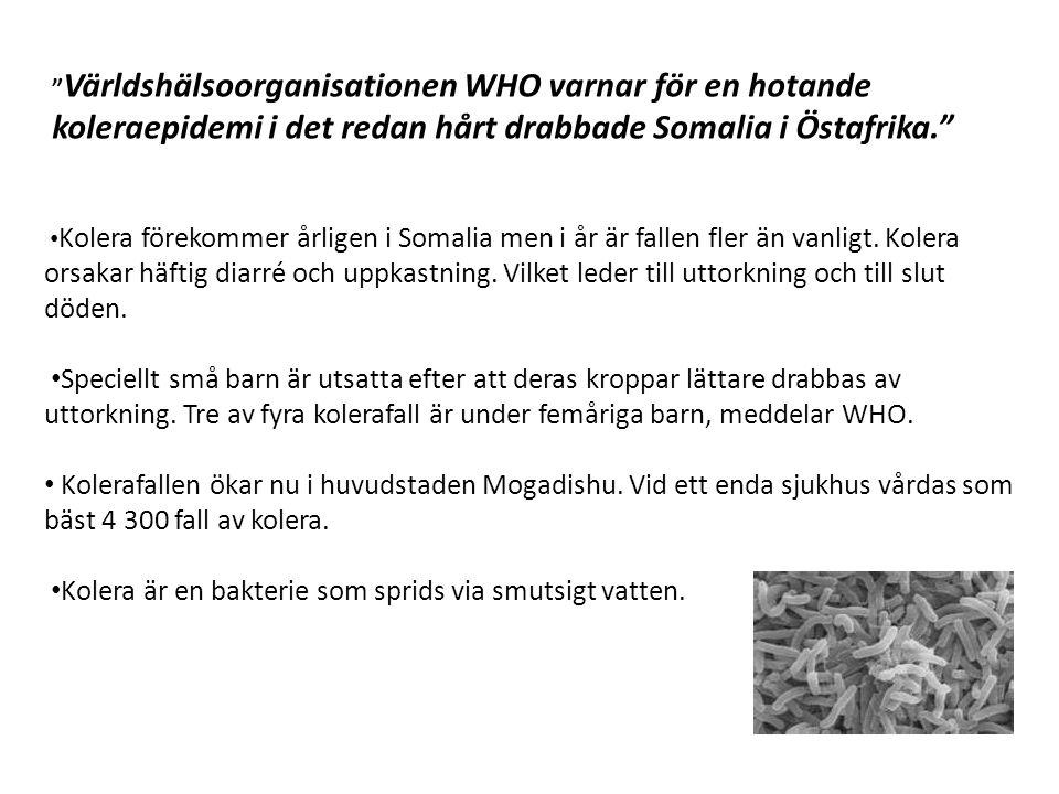• Kolera förekommer årligen i Somalia men i år är fallen fler än vanligt.