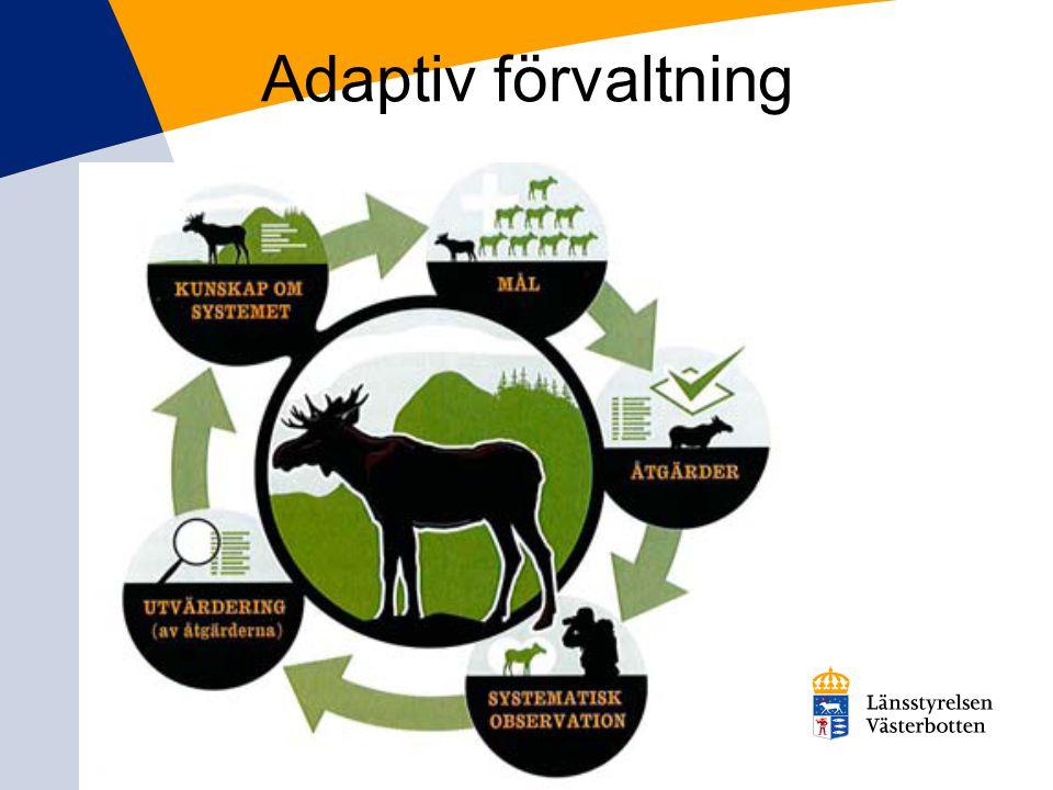 Adaptiv förvaltning