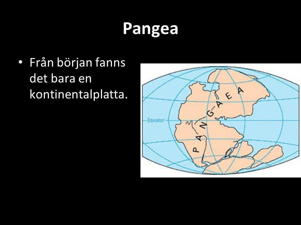 Pangea • Från början fanns det bara en kontinentalplatta.