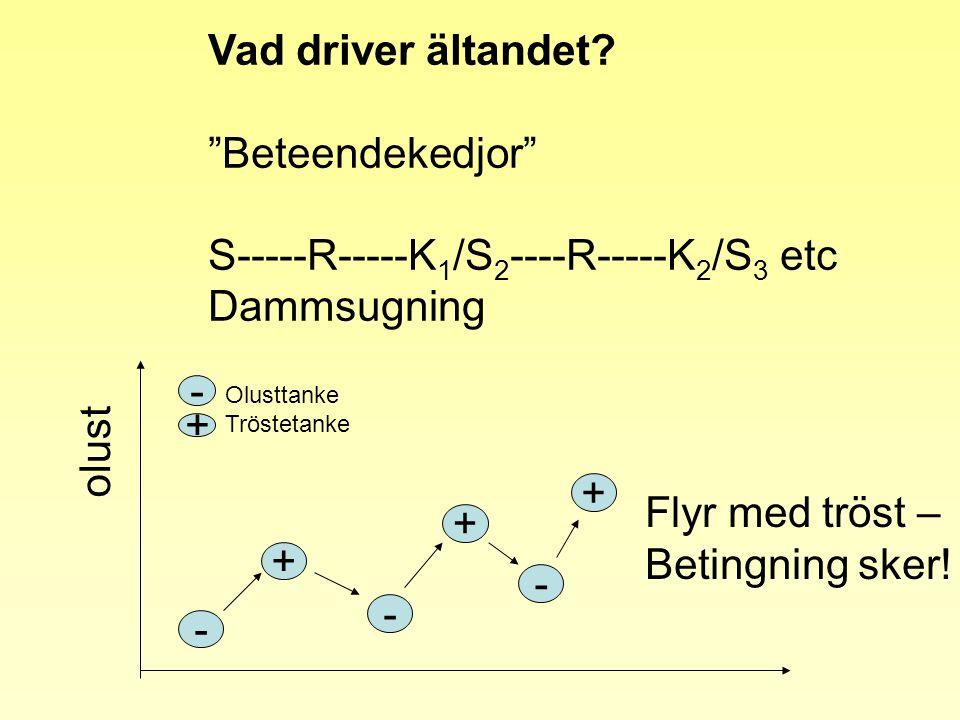 "Vad driver ältandet? ""Beteendekedjor"" S-----R-----K 1 /S 2 ----R-----K 2 /S 3 etc Dammsugning olust - + - - - + + + Olusttanke Tröstetanke Flyr med tr"