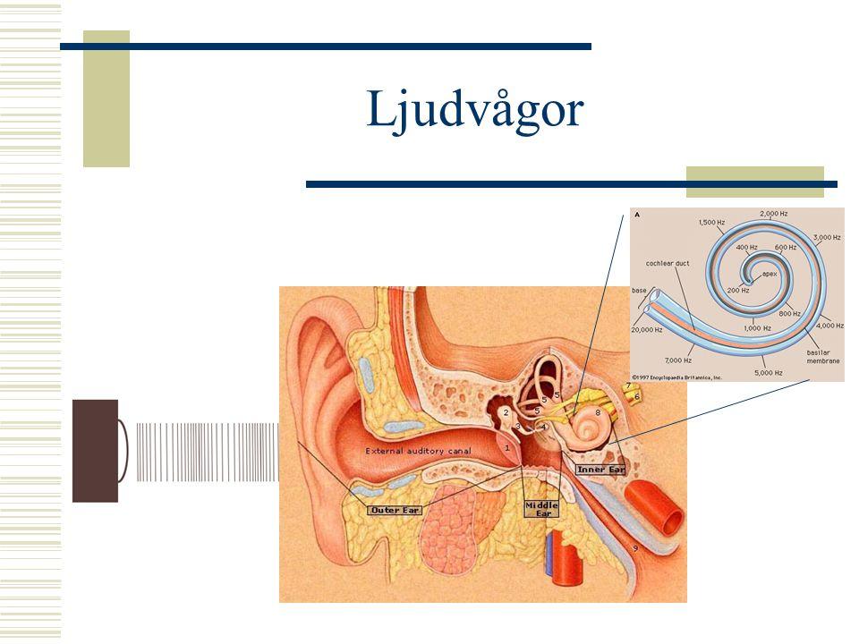 Amplitud  Volym – SPL (Sound Pressure Level)  Ljudtrycksnivå  Förändrat tryck på trumhinnan  Mäts som lufttryck, i bar  Normalt lufttryck ca 1 bar  Örat uppfattar skillnader på delar av en  bar (mikro= miljondel)  Små, små förändringar