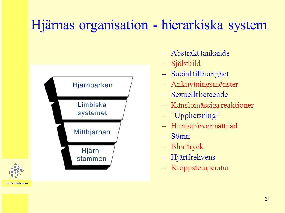 BUP - Elefanten 21 Hjärnas organisation - hierarkiska system –Abstrakt tänkande –Självbild –Social tillhörighet –Anknytningsmönster –Sexuellt beteende