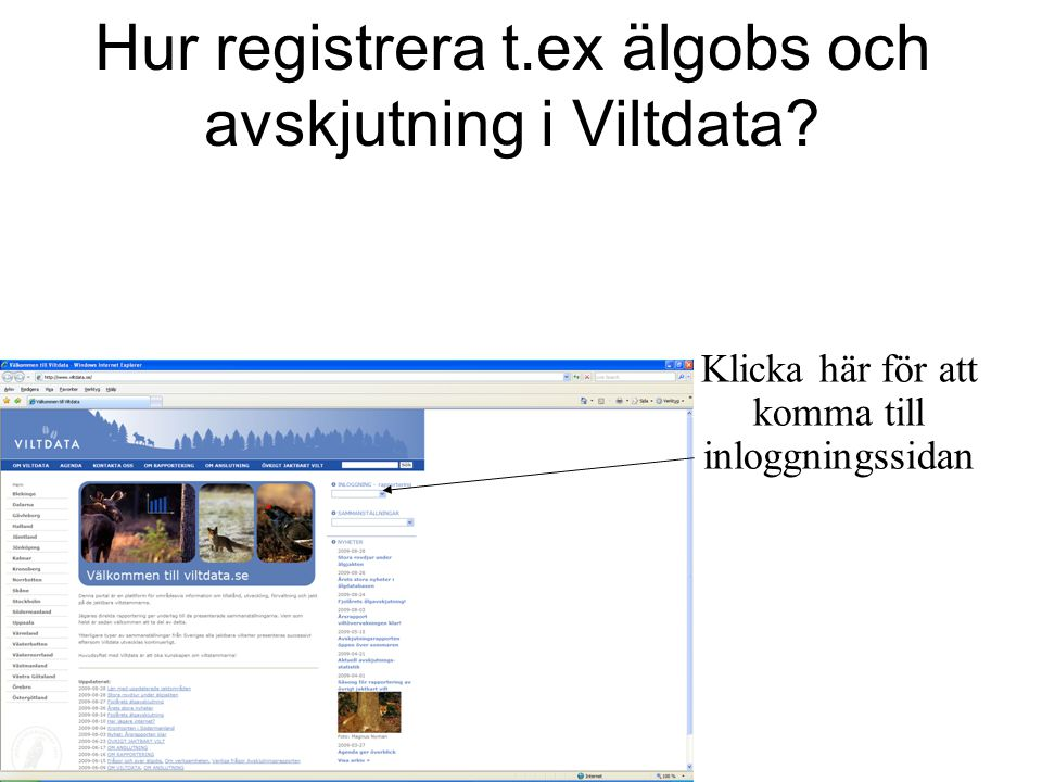 Hur registrera t.ex älgobs och avskjutning i Viltdata? Klicka här för att komma till inloggningssidan