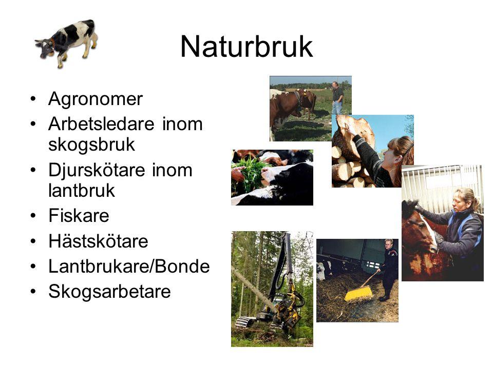 Naturbruk •Agronomer •Arbetsledare inom skogsbruk •Djurskötare inom lantbruk •Fiskare •Hästskötare •Lantbrukare/Bonde •Skogsarbetare