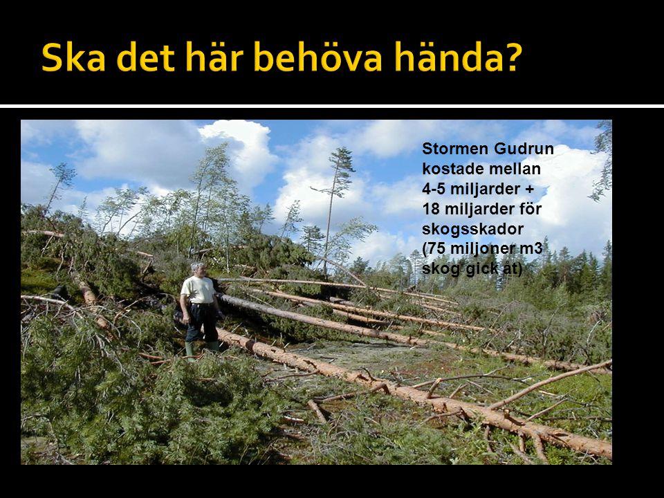  Lägg in bild från Kittillä om du får materialet. Stormen Gudrun kostade mellan 4-5 miljarder + 18 miljarder för skogsskador (75 miljoner m3 skog gic