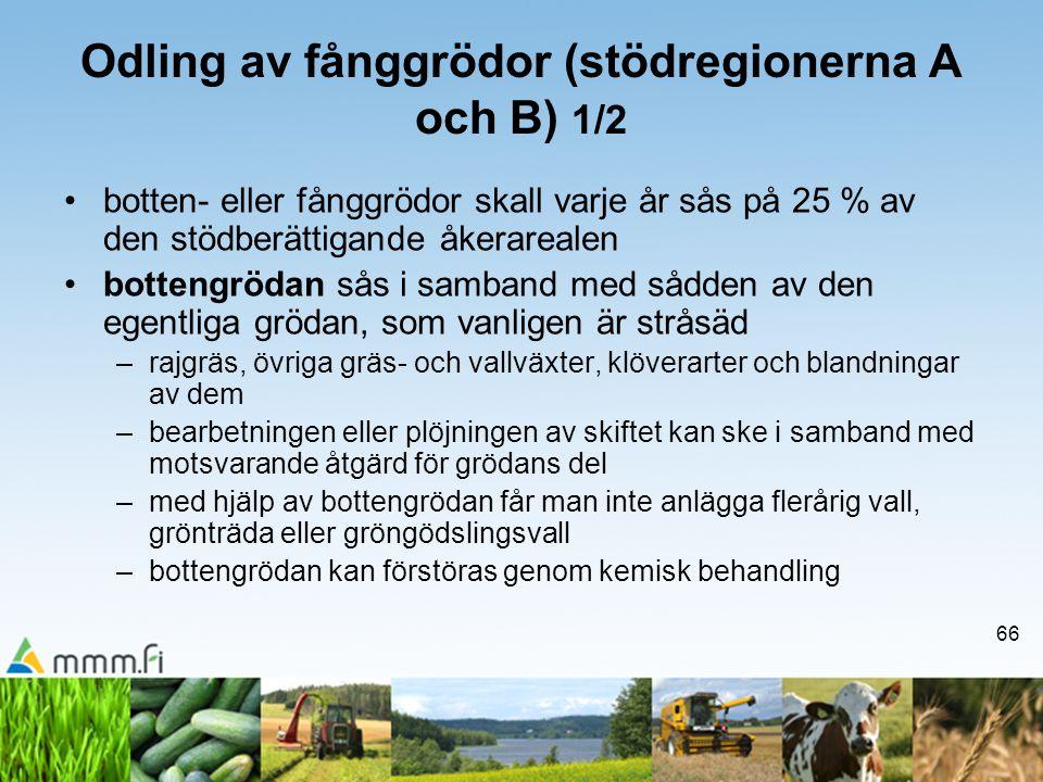 66 Odling av fånggrödor (stödregionerna A och B) 1/2 •botten- eller fånggrödor skall varje år sås på 25 % av den stödberättigande åkerarealen •botteng