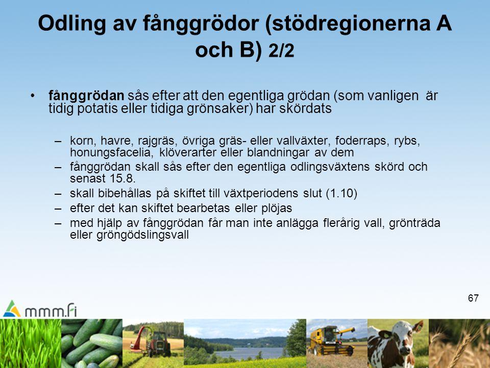 67 Odling av fånggrödor (stödregionerna A och B) 2/2 •fånggrödan sås efter att den egentliga grödan (som vanligen är tidig potatis eller tidiga grönsa