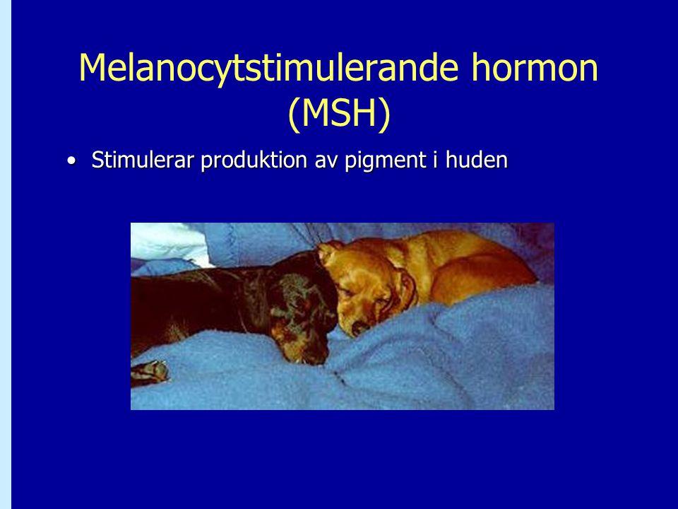 Melanocytstimulerande hormon (MSH) •Stimulerar produktion av pigment i huden