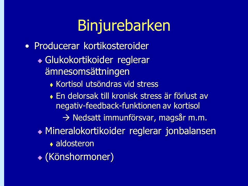 Binjurebarken •Producerar kortikosteroider  Glukokortikoider reglerar ämnesomsättningen  Kortisol utsöndras vid stress  En delorsak till kronisk st
