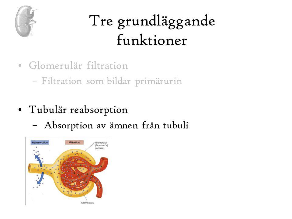 Tre grundläggande funktioner •Glomerulär filtration –Filtration som bildar primärurin •Tubulär reabsorption – Absorption av ämnen från tubuli